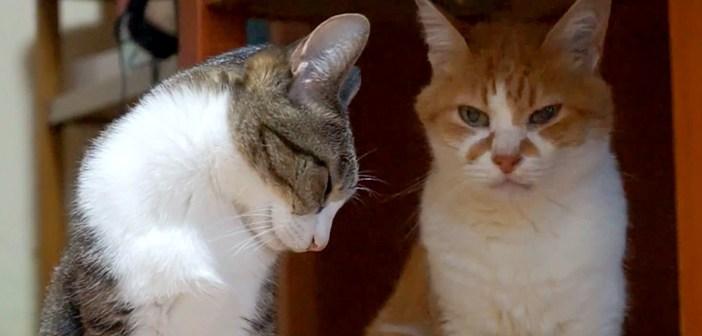 頭を撫でられたい猫