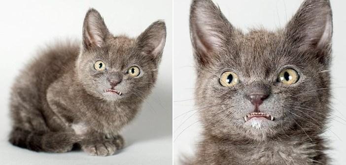 歯をむき出しにした子猫