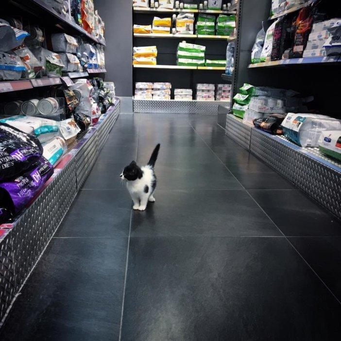 お店の中の子猫