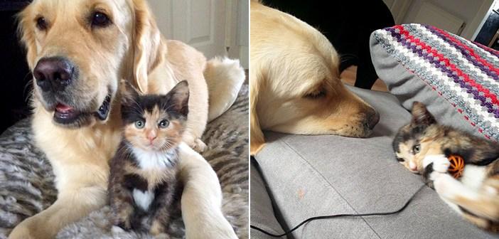 仲良しな犬と子猫