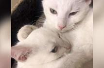 仲良し兄弟猫