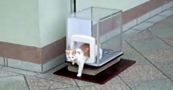 エレベーター猫