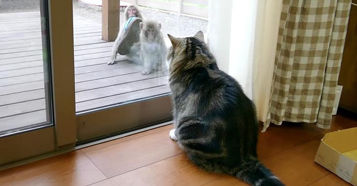 サルを発見した猫