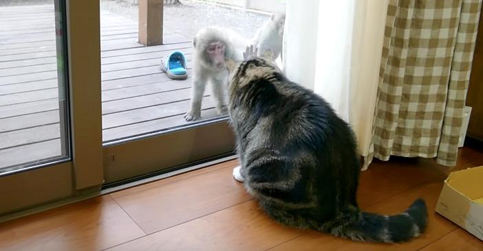 接近するサルと猫