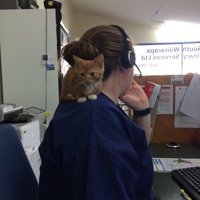 肩好き子猫