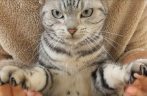 爪を切る猫