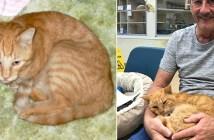 14年後に見つかった猫