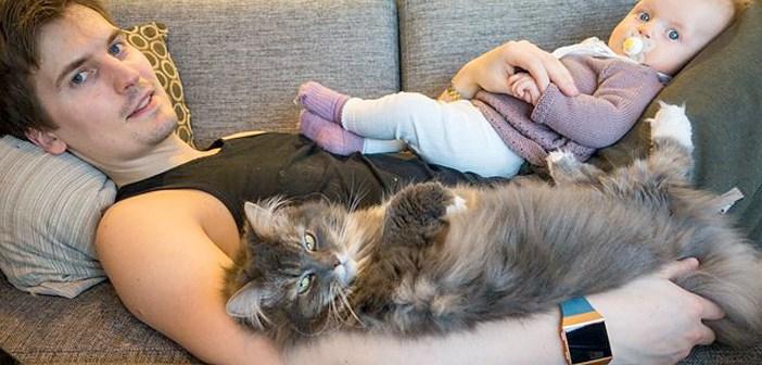 お父さんと赤ちゃんと猫