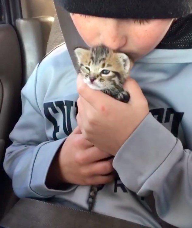 ギュッとされる子猫