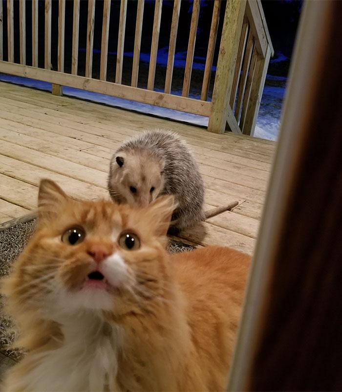 困った表情の猫