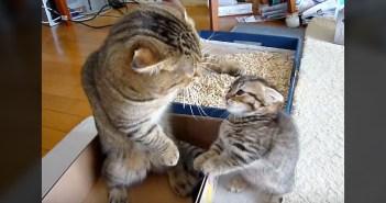 子猫を叱る父猫