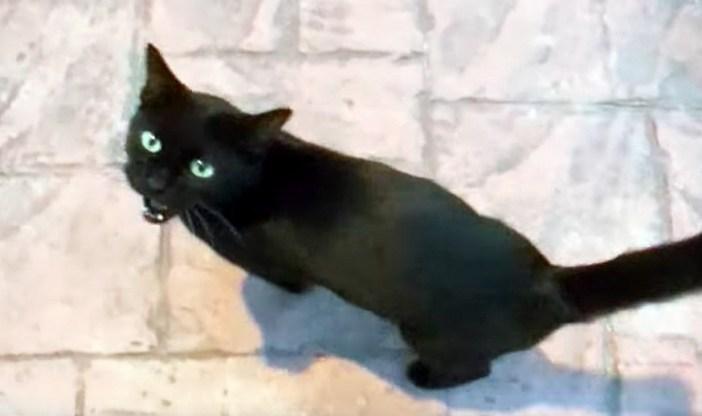 見上げて話しかける猫