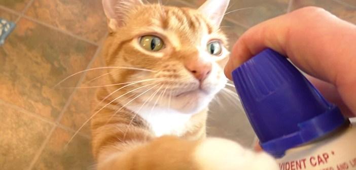 ホイップクリーム大好き猫