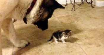 子猫好きの犬
