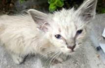 茂みから出て来た子猫