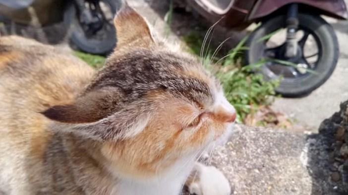 イカ耳猫さん
