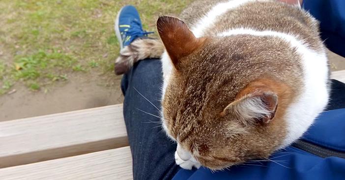 公園で出会った人懐っこい猫