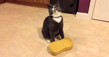 スポンジ猫