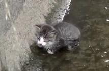 用水路に落ちた子猫