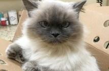 14歳の猫