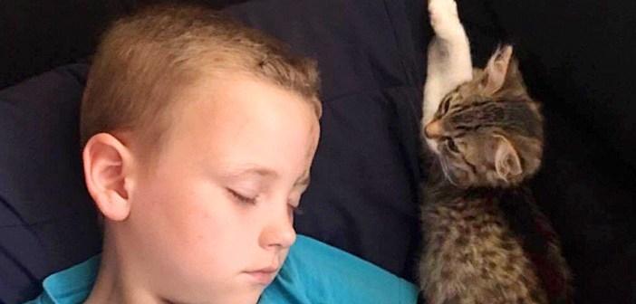 男の子と子猫