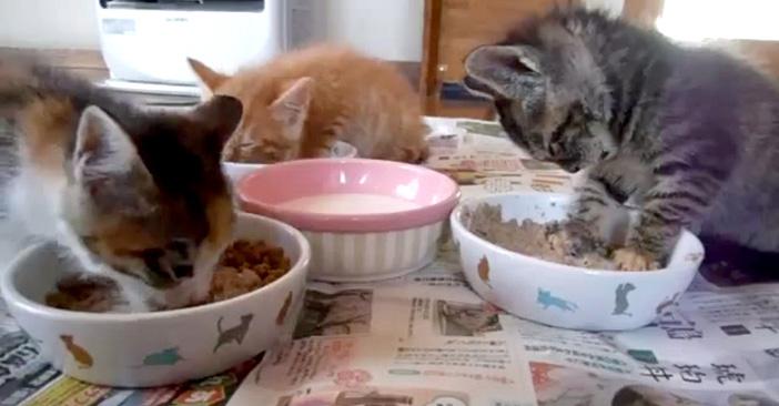 食べたいけど眠たい子猫