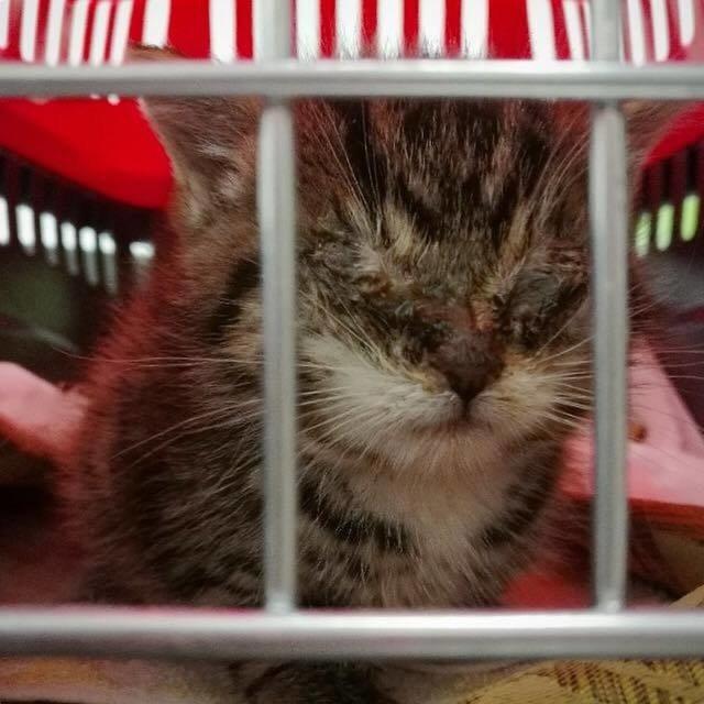 目が閉じられた子猫