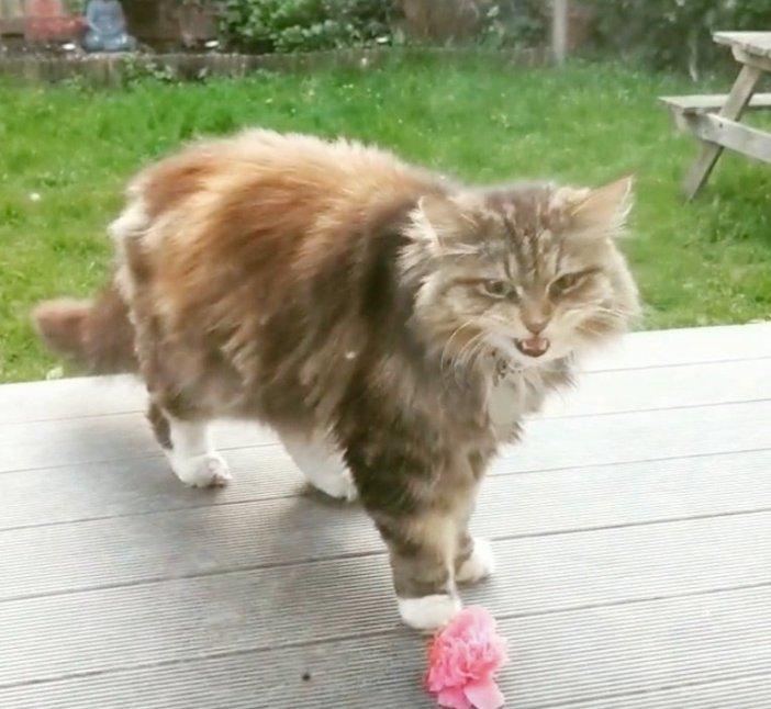花を持ってくる猫
