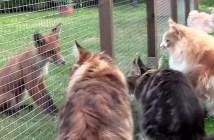 興味津々の猫とキツネ