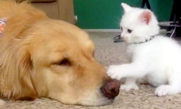 犬の鼻をペチペチ