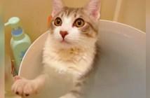 お風呂が大好きになった猫