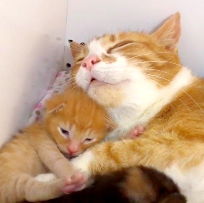 幸せいっぱいの猫