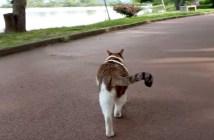 シッポを振りながら歩く猫