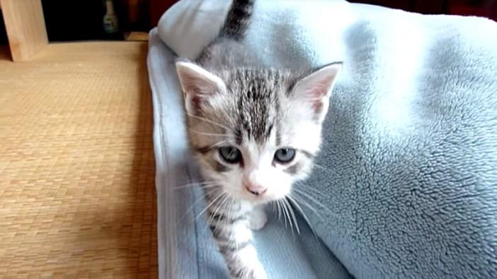 ついて来る子猫