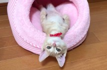 不思議な行動をとる子猫