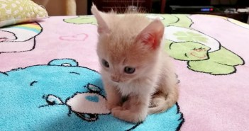香箱座り子猫