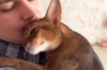 嬉しそうに抱きつく猫