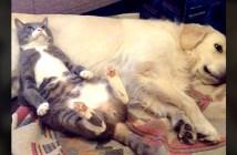 犬枕で眠る猫