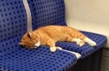 地下鉄の猫