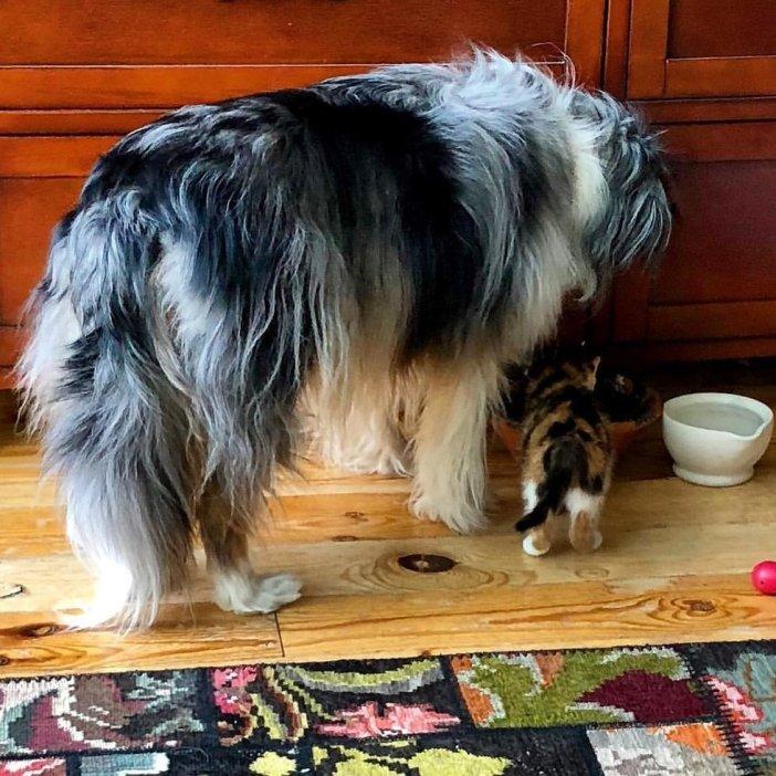 食事をする犬と子猫