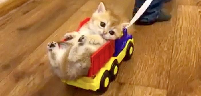トラックの荷台に乗る子猫