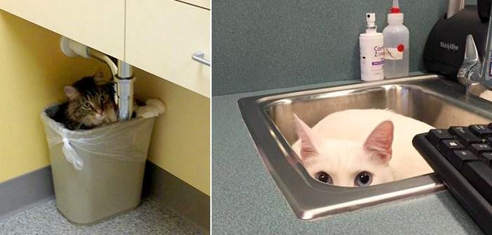 隠れる猫達
