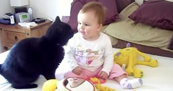 赤ちゃんと仲良しな猫