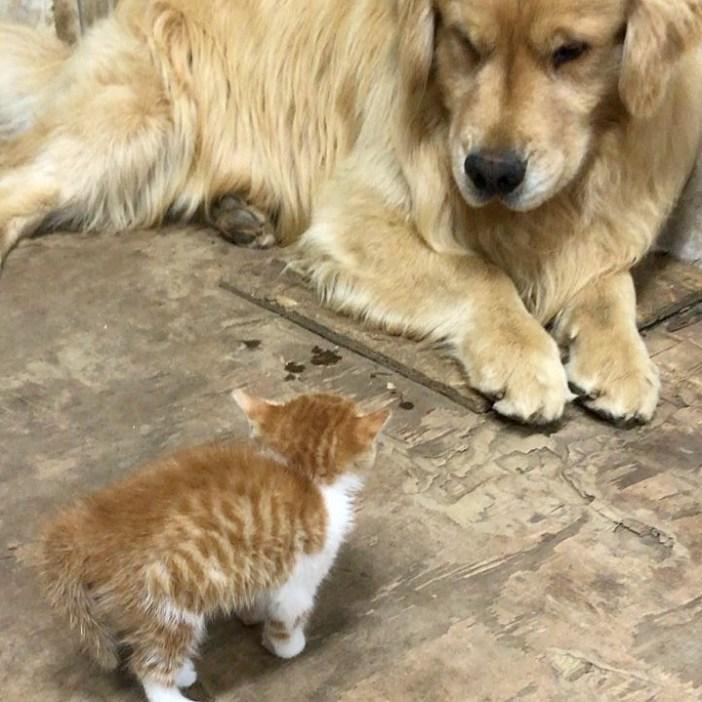 初めて出会った子猫と犬