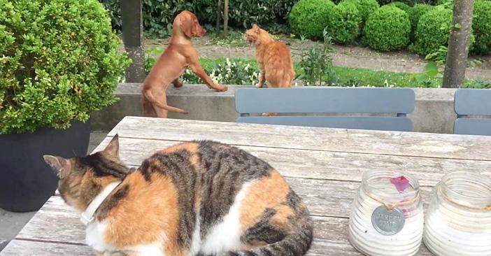 友達の猫と犬