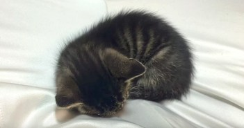 膝が好きな子猫