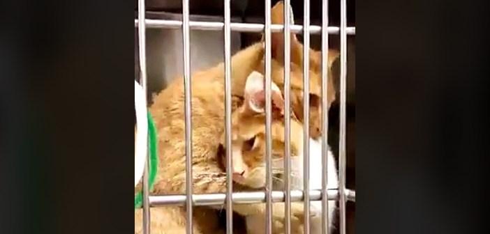 ハグする姉妹猫