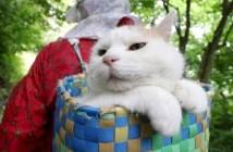 かごに入る猫