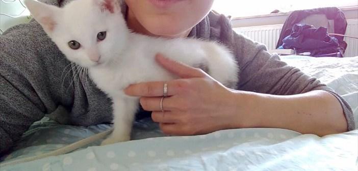 キスされた子猫