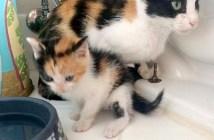 三毛のオスの子猫